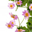 Flowers beautiful decorative border - Foto Stock