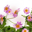 Flowers beautiful decorative border — Stock Photo