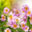 Flower garden beautiful design — Stockfoto