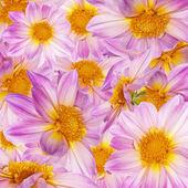Pink flowers decorative background — Stock Photo
