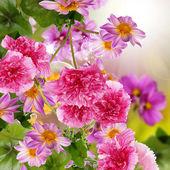 Flower garden beautiful design — Stock Photo
