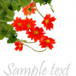 Flowers beautiful decorative card — Stockfoto