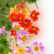 Flowers beautiful decorative card — Stock Photo