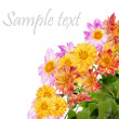 Flowers decorative beautiful card — Stockfoto