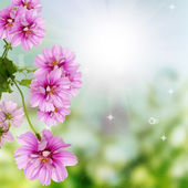 Flowers decorative beautiful design — Stock Photo