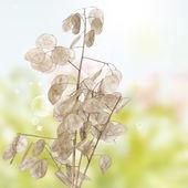Japanese dry plant over white background — Stock Photo