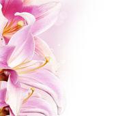 美丽的花朵边框 — 图库照片