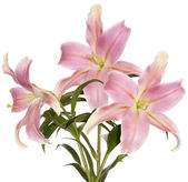 Bouquet beautiful decorative light pink lily — Stock Photo