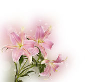 Flowers border — Stock Photo