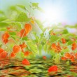 Sunny summer nature.Blur abstract background — Stock Photo