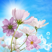 Beautiful pink decorative flowers — Stock Photo