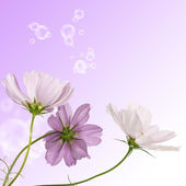 Decorative beautiful flower design — Stock Photo