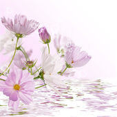 Decorative pink flowers in water — Stock Photo
