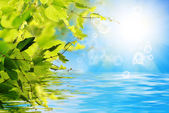 Nature solar summer background — Stock Photo