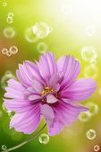 Pink decorative beautiful flower — Stock Photo