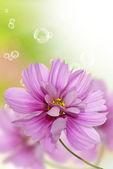 Pink decorative beautiful flowers — Stock Photo