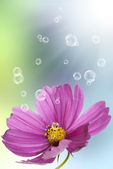 Pink decorative beautiful flower — Stock Photo