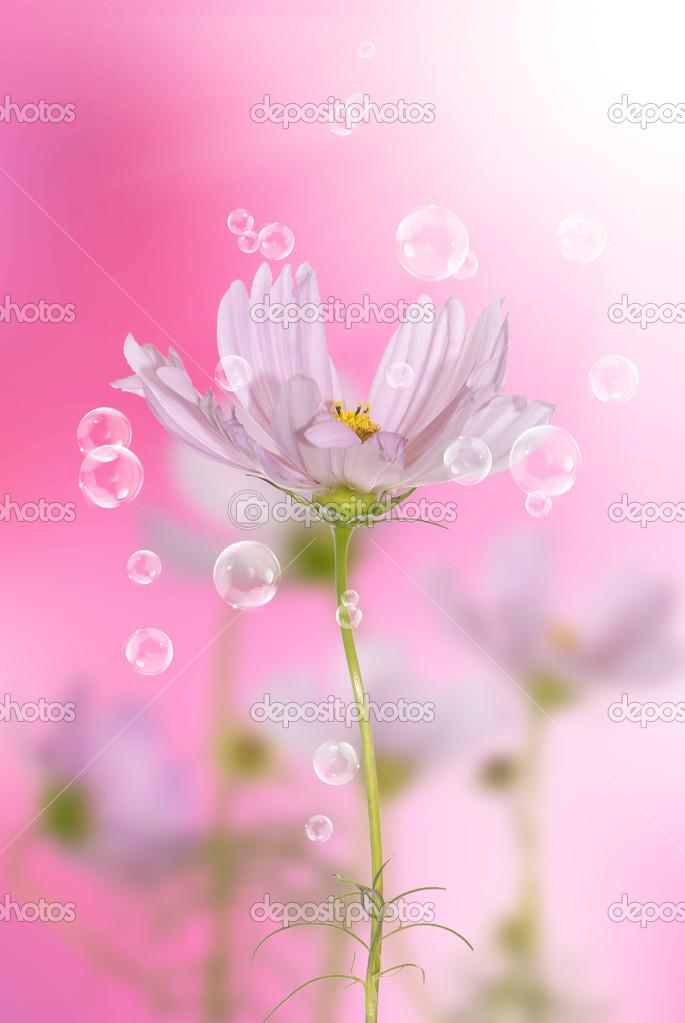 粉红色装饰美丽的花朵上模糊抽象浅粉色背景– 图库图片