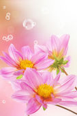 Pink decorative beautiful flowers — 图库照片