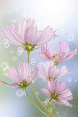Holidays beautiful flower card — Stock Photo