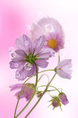λουλούδια διακοσμητικά όμορφες διακοπές κάρτα — Φωτογραφία Αρχείου