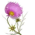 Flowers decorative beautiful holidays card — Stock Photo #12850670