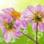 Flowers decorative beautiful holidays card — Stock Photo #12880930