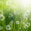 Spring solar nature background — Stock Photo