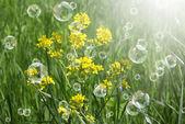 Fondo de naturaleza solar de primavera — Foto de Stock