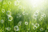 Spring solar nature background — Stock Photo