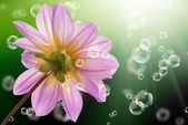Flowers decorative beautiful holidays card — Stock Photo
