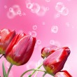 Beautiful holidays card with red decorative garden tulips — Стоковая фотография