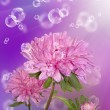 Holidays beautiful flower card.Chrysanthemum - 图库照片