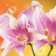 Holidays beautiful flower card.Lily — Stock Photo