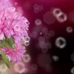 Dahlia. Holidays beautiful flower card — Stock Photo