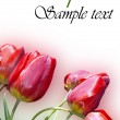 Beautiful red decorative tulips — Stock Photo