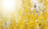 Autumn nature background — Stock Photo