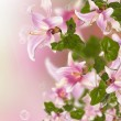 Stock Photo: Beautiful pink exotic flowers.Flora design