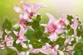 Beautiful pink exotic flowers.Flora design — Stock Photo