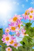 Summer sunny nature.Exotic flowers — Stock Photo