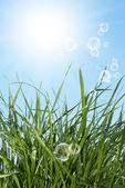 Весна молодая трава — Стоковое фото