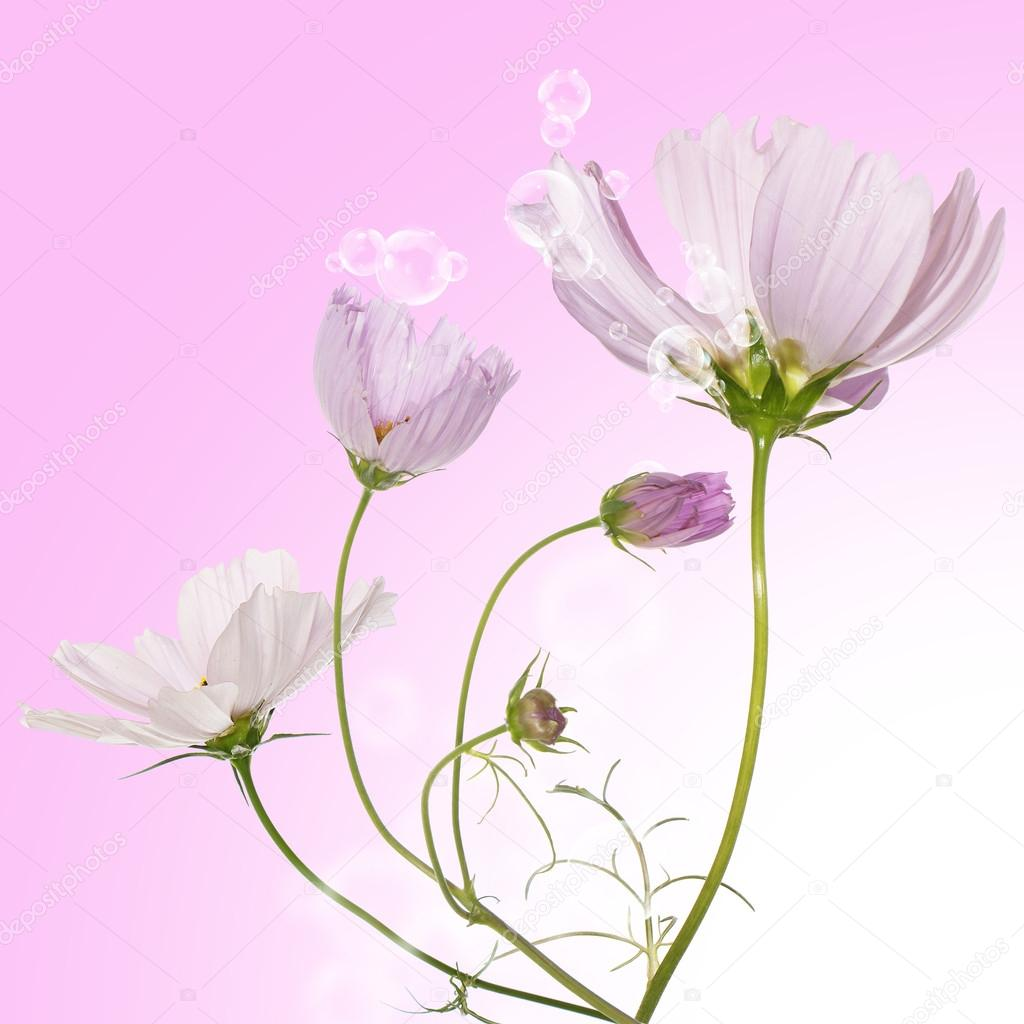 Beautiful pink flowers — Stock Photo #14149348