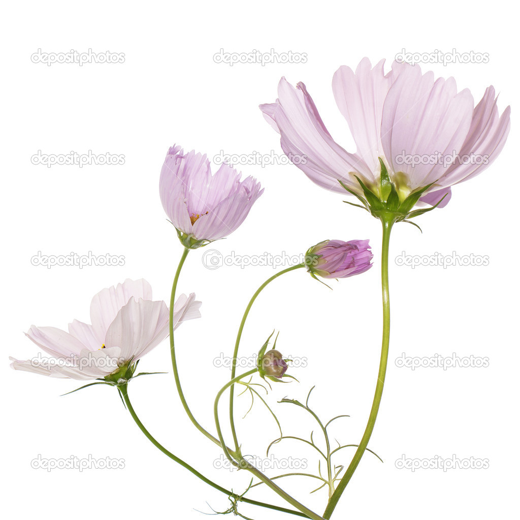 Beautiful pink flowers  Stock Photo #14149351