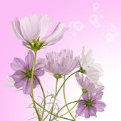 Beautiful pink flowers.Holidays bouquet — Stock Photo