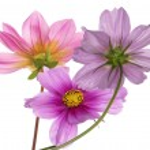 carta di frontiera fiore — Foto Stock