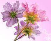 Flower border card — Stock Photo