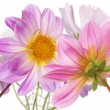 Flower beautiful decorative card — Stock Photo