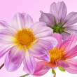 Stock Photo: Beautiful flowers card.Floral background