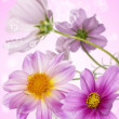 Decorative pink exotic flowers.Holidays card — Stockfoto