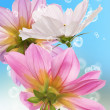 Beautiful flowers card.Floral background — Foto de Stock